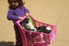 Filhotes no Carrinho de Supermercado de brinquedo