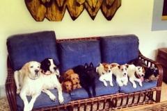 9 Cães deitados no mesmo sofá