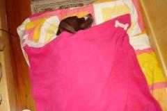 Missy em sua cama coberta com um edredom cor de rosa.
