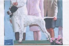 Missy quando foi campeã aos 18 meses nos Estados Unidos, titulo de Best Puppy.